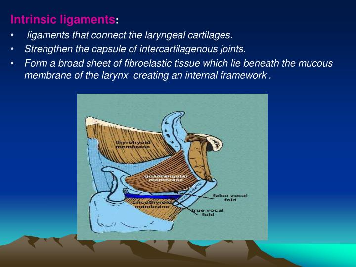 Intrinsic ligaments