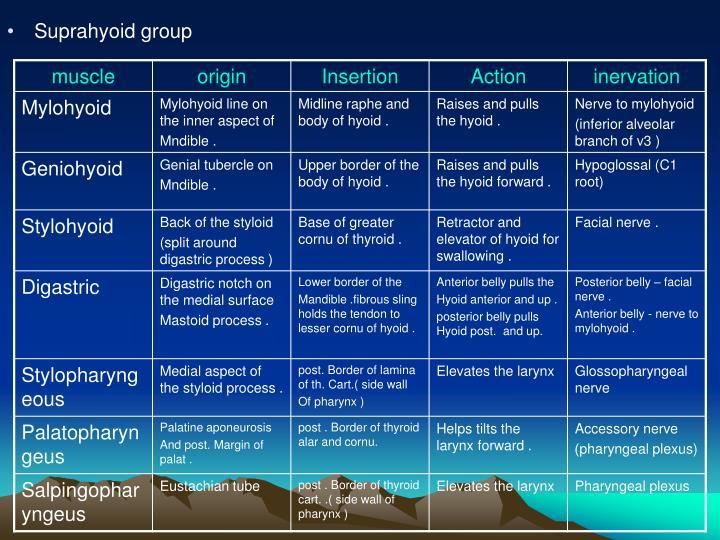 Suprahyoid group