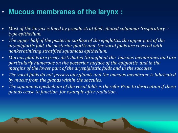 Mucous membranes of the larynx :