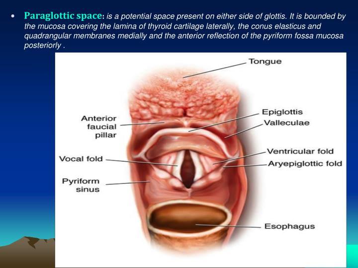 Paraglottic space