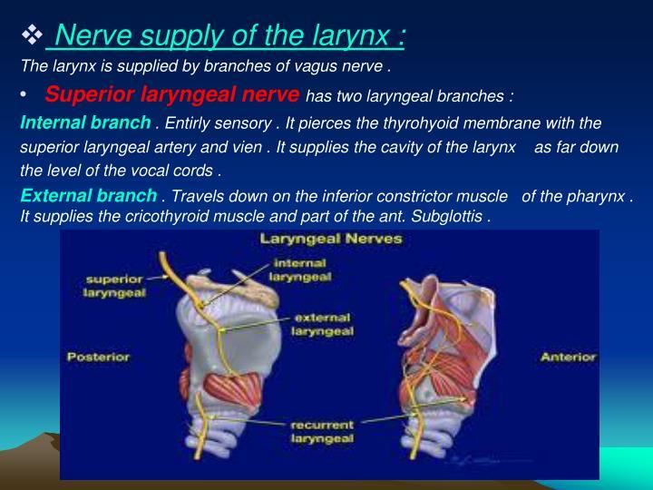 Nerve supply of the larynx :