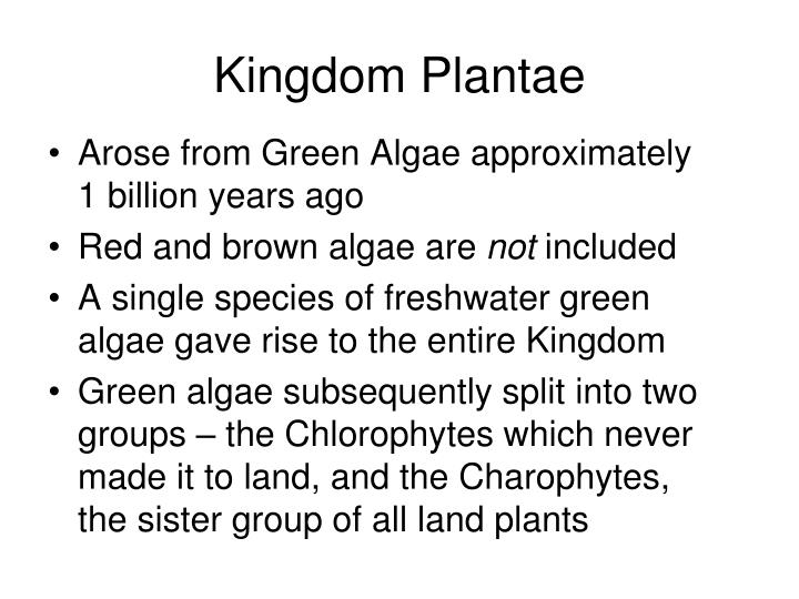 kingdom plantae n.