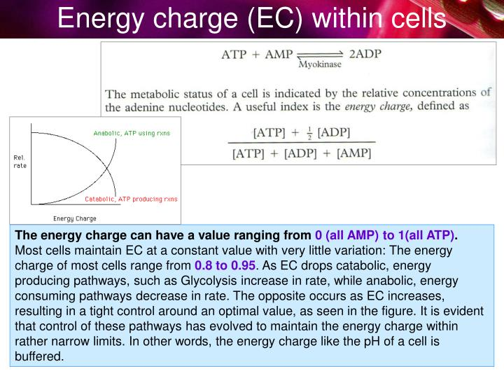 Energy charge (EC) within cells