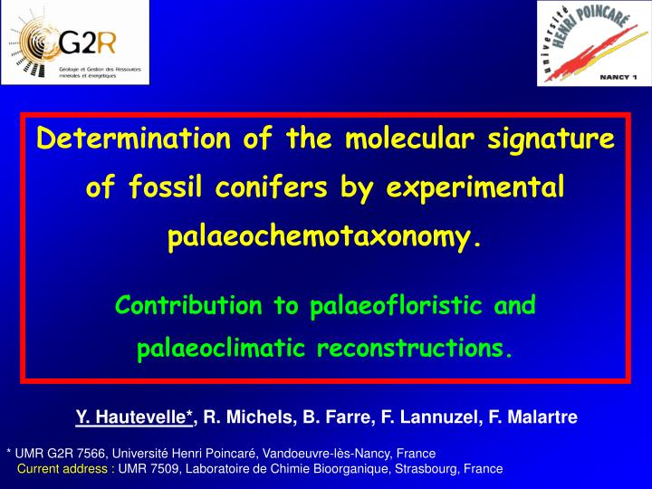 Determination of the molecular signature of fossil conifers by experimental palaeochemotaxonomy.