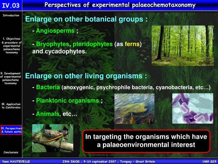 Perspectives of experimental palaeochemotaxonomy