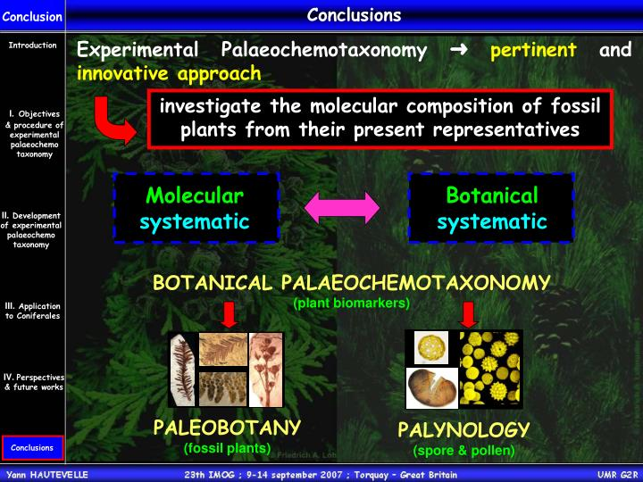 investigate the molecular composition of fossil plants from their present representatives