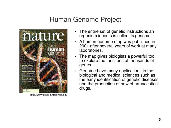 The entire set of genetic instructions an organism inherits is called its genome.