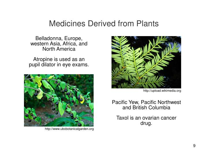 Medicines Derived from Plants