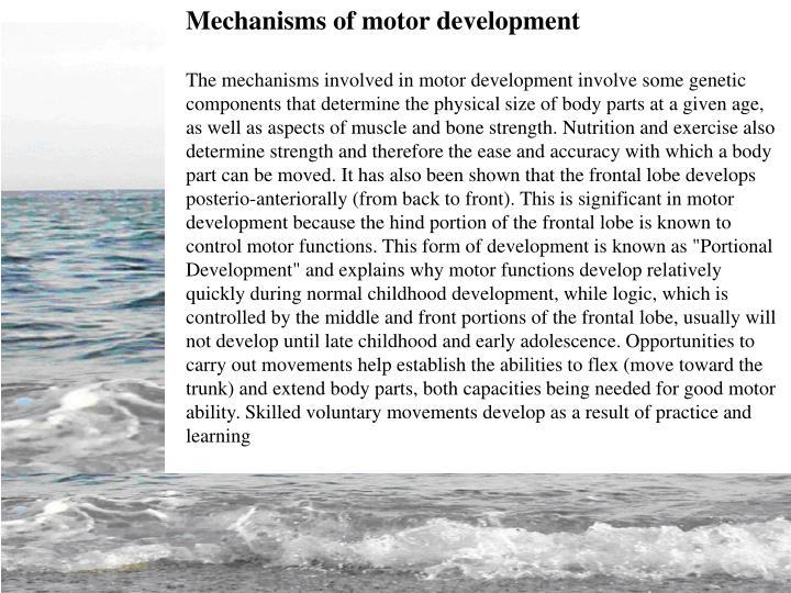 Mechanisms of motor development