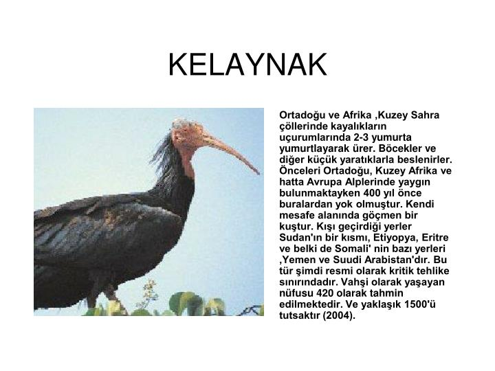 KELAYNAK