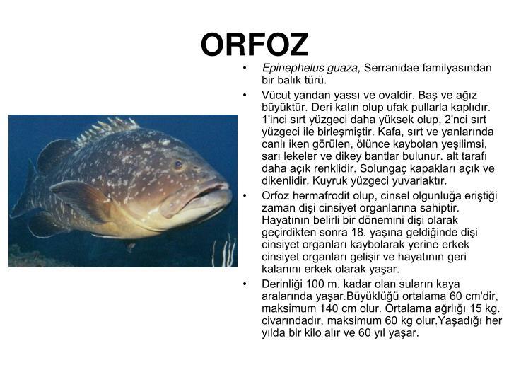 ORFOZ