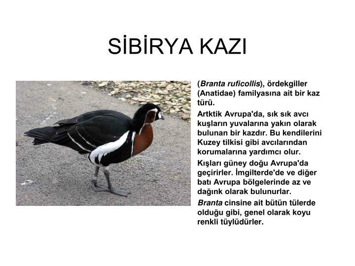 SİBİRYA KAZI