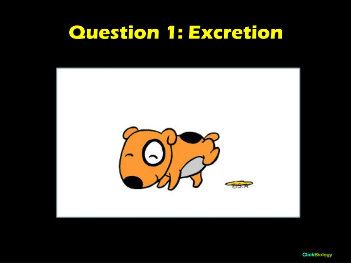 Question 1: Excretion