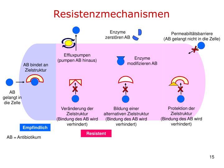 Enzyme zerstören AB