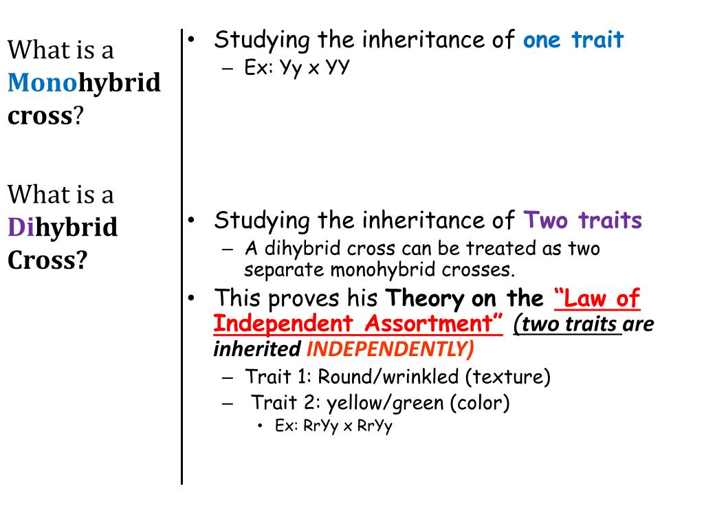 Homework help genetics two trait crosses