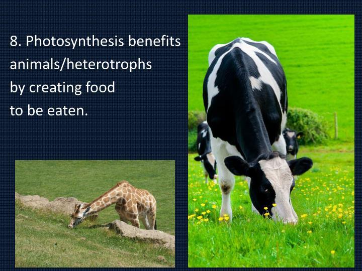 8. Photosynthesis benefits