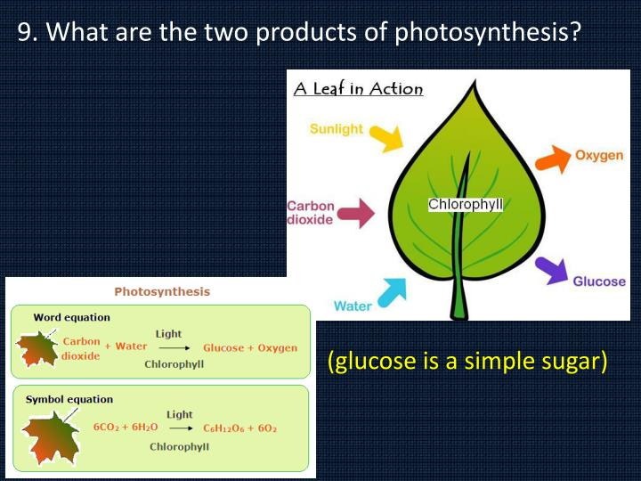 9. What are the two products of photosynthesis?