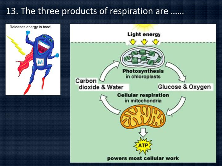 13. The three products of respiration are ……