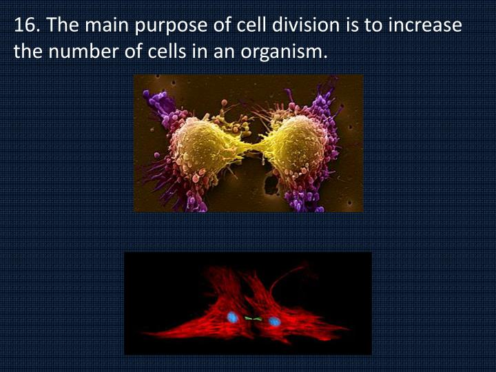 16. The main purpose of cell division is to increase the number of cells in an organism.