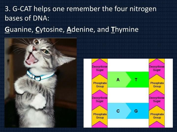 3. G-CAT helps one remember the four nitrogen bases of DNA: