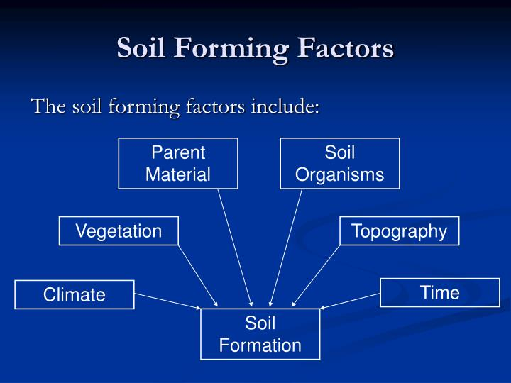 the soil forming factors