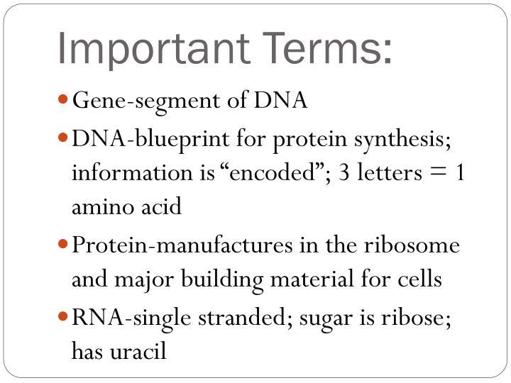 Ppt protein synthesis powerpoint presentation id3618088 protein synthesis important terms important terms malvernweather Choice Image