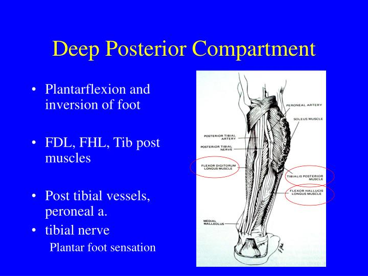 Deep Posterior Compartment