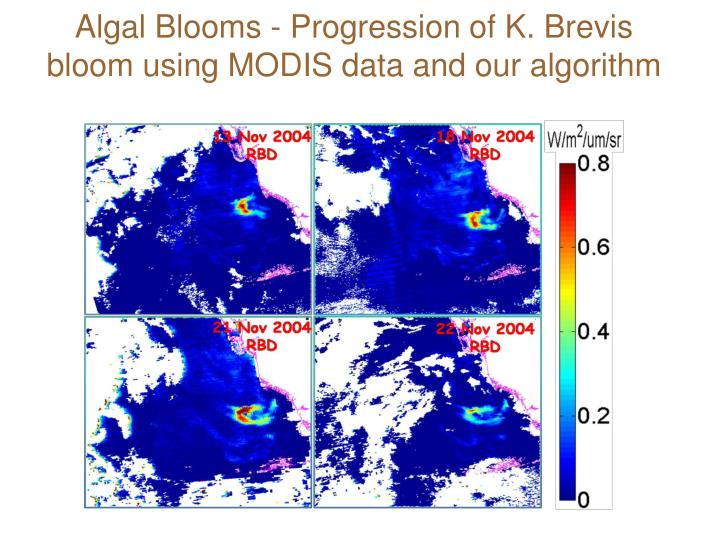 Algal Blooms - Progression of K. Brevis bloom using MODIS data and our algorithm