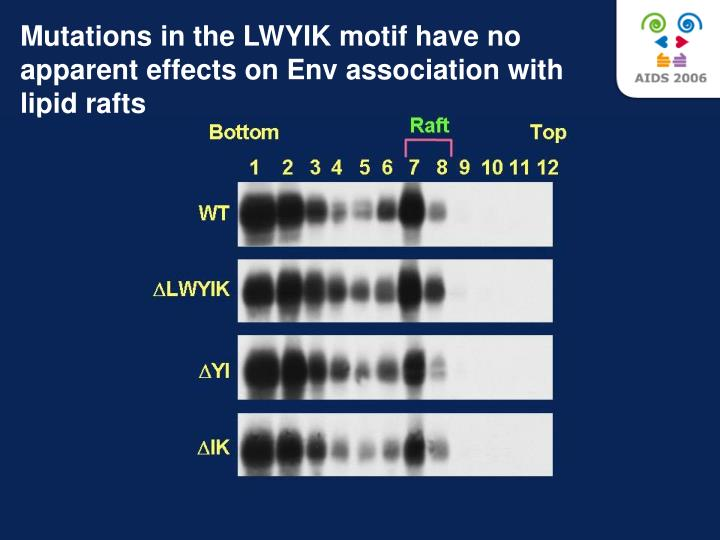 Mutations in the LWYIK motif have no