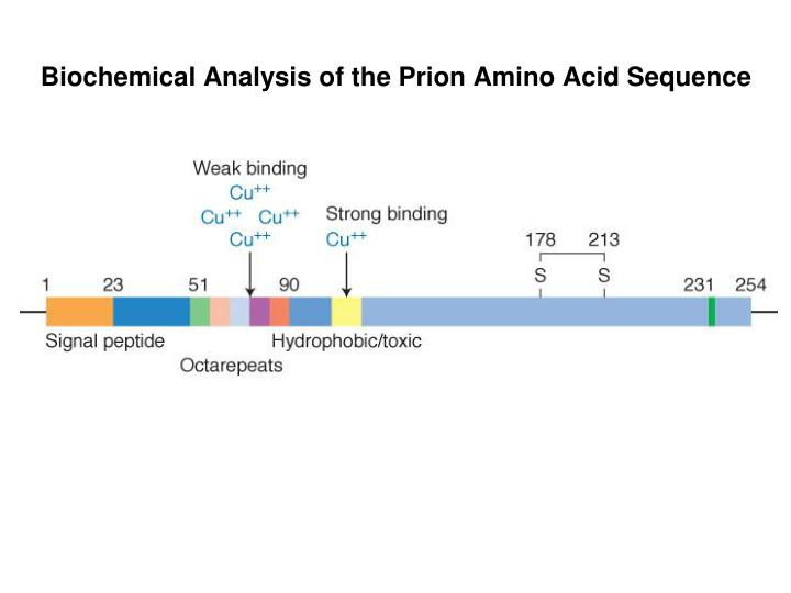 Biochemical Analysis of the Prion Amino Acid Sequence