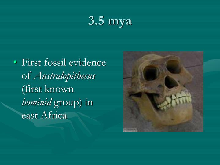 fossil evidence essay Arguably the most significant fossil evidence for the earliest expansion of homo ergaster beyond africa has been discovered at the site of dmanisi, georgia.