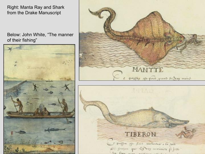 Right: Manta Ray and Shark from the Drake Manuscript