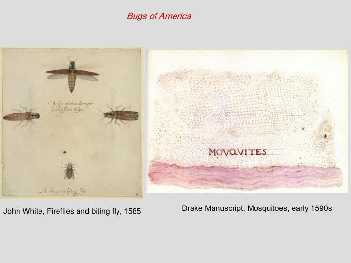 Bugs of America