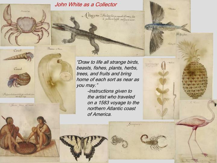 John White as a Collector