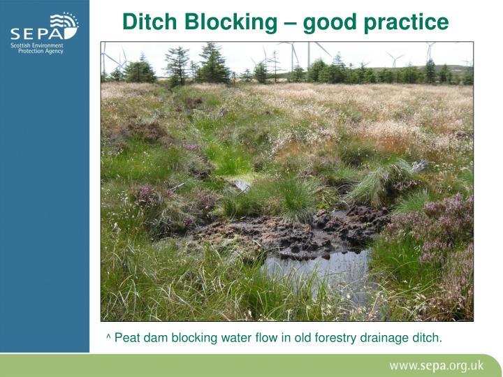 Ditch Blocking – good practice