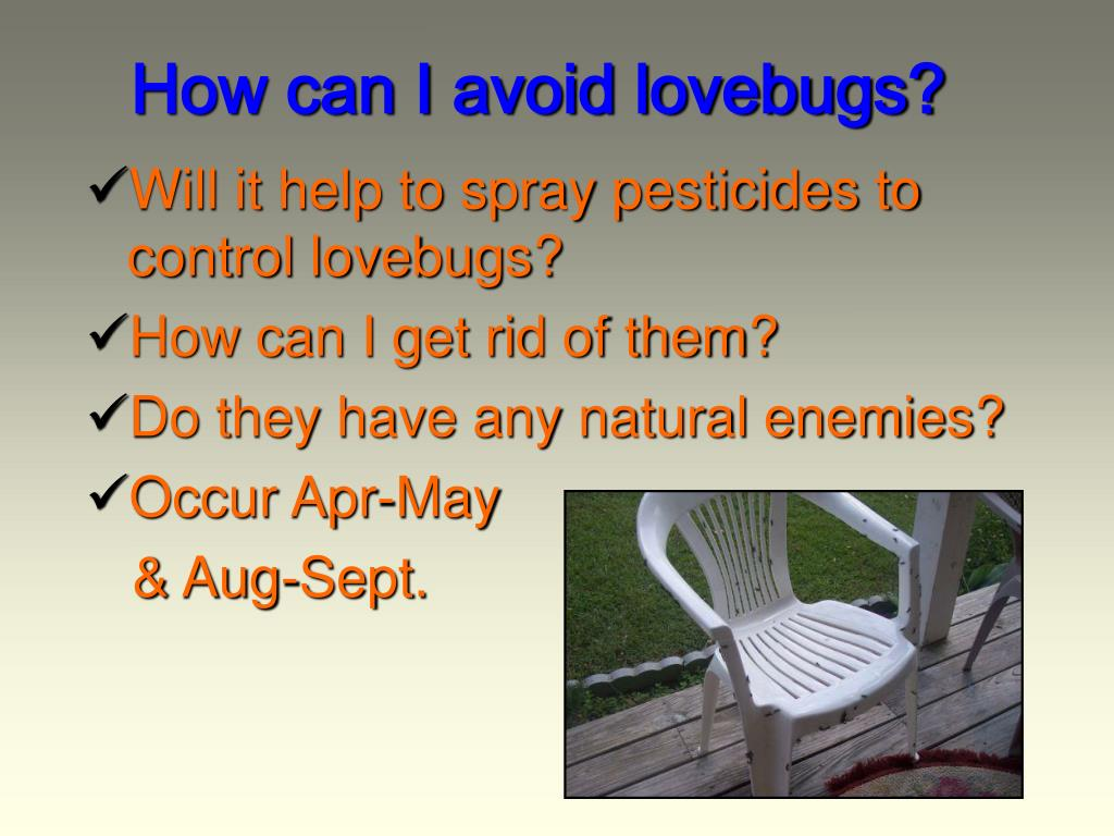 PPT - Living with Lovebugs in Florida PowerPoint