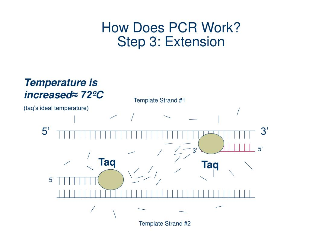 PPT - Polymerase Chain Reaction PowerPoint Presentation