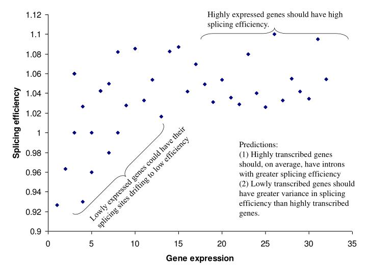 Highly expressed genes should have high splicing efficiency.
