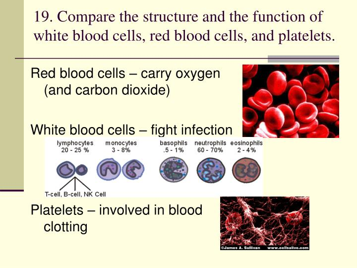 19. Compare the structure and the function of white blood cells, red blood cells, and platelets.