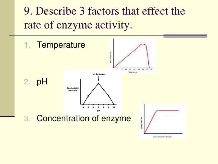 9. Describe 3 factors that effect the rate of enzyme activity.