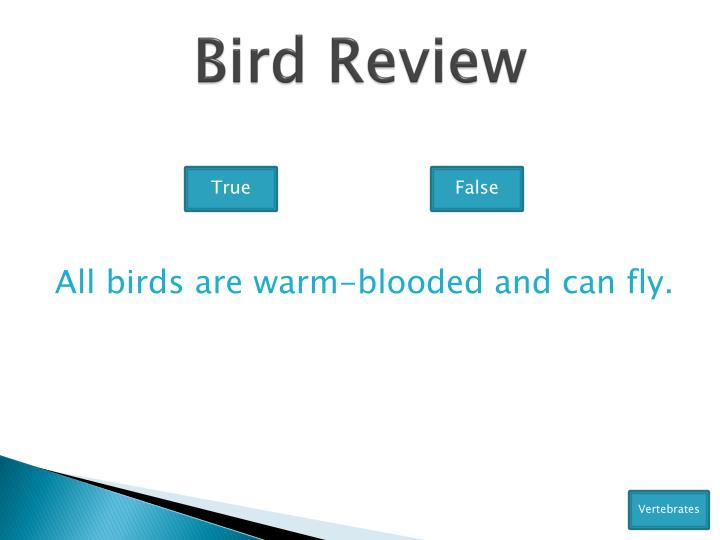 Bird Review