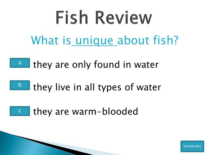 Fish Review