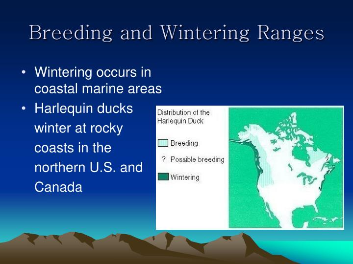 Breeding and Wintering Ranges