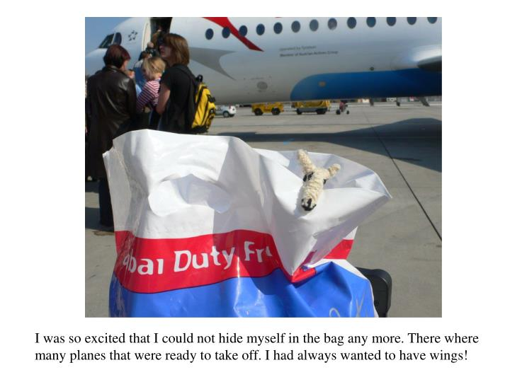 I was so excited that I could not hide myself in the bag any more. There where many planes that were ready to take off. I had always wanted to have wings!