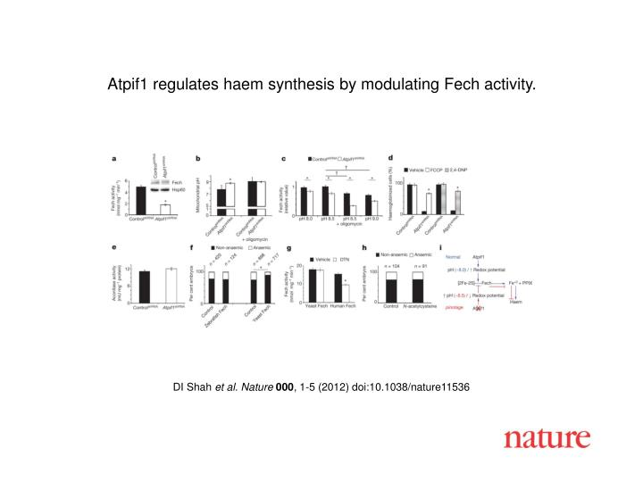 Atpif1 regulates haem synthesis by modulating Fech activity.