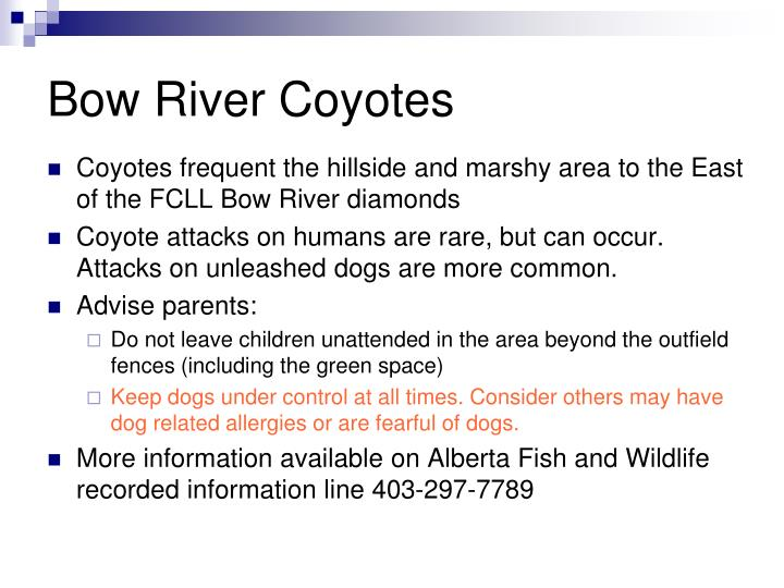 Bow River Coyotes