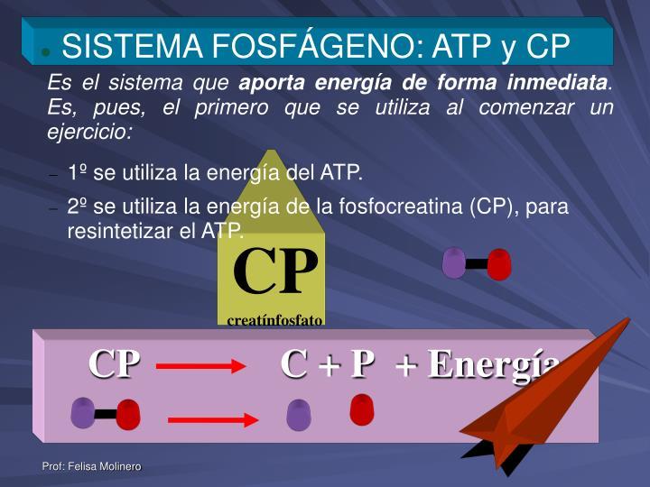 SISTEMA FOSFÁGENO: ATP y CP