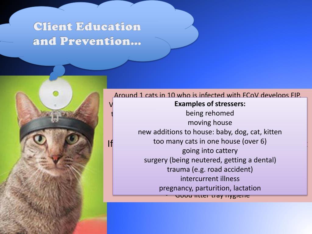 "PPT - Feline Infectious Peritonitis ""FIP"" PowerPoint Presentation"