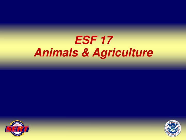 ESF 17