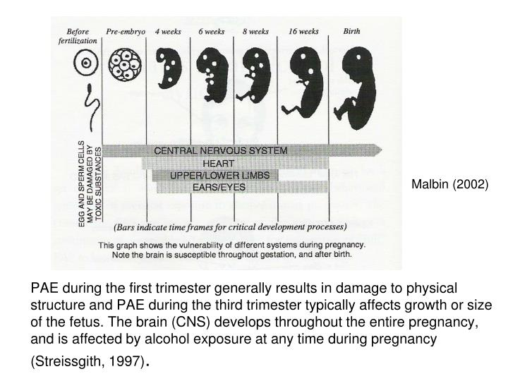 PAE during the first trimester generally results in damage to physical structure and PAE during the ...
